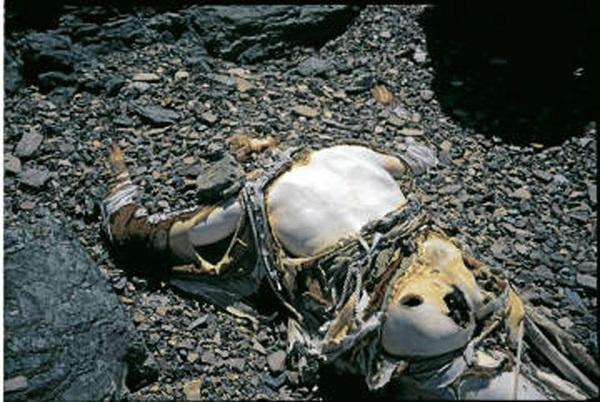 Тело Джорджа Мэллори (George Mallory) на Эвересте