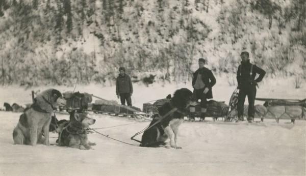 Собачьи упряжки экспедиции экспедиции Клиффорда Паркера. 1912 год