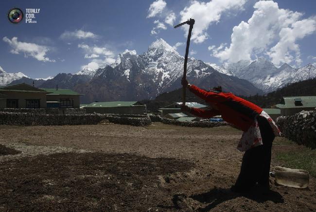 Женщина работает в поле недалеко от горы Тамсерку в селении Кумджунг в районе Кхумбу, Непал. (NAVESH CHITRAKAR/REUTERS)