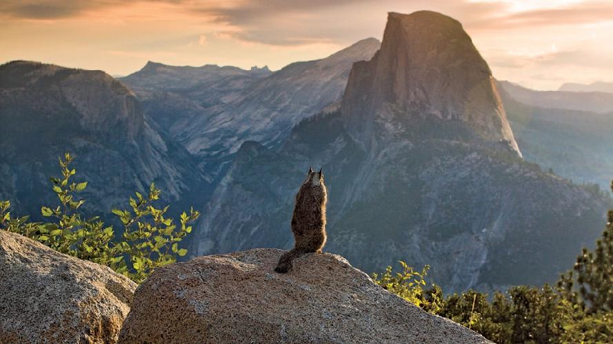 Национальный парк Йосемити, штат Калифорния, США. (Фото: Майкл Ходжес)