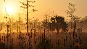 Эверглейдс – особый экорегион на юге штата Флорида, США. Здесь вы можете встретить и крокодилов, и аллигаторов, и ядовитых змей, и даже медведей с пантерами. К счастью, риск оказаться с ними лицом к лицу не так велик — территория надежно защищена от попадания на нее случайных прохожих.