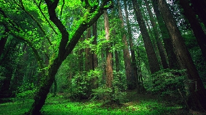 Тропический лес Амазонки, самый крупный тропический лес на Земле, является домом для 20% всех видов живых существ на планете. Как вы, наверное, догадываетесь, здесь же может крыться и угроза для того, кто окажется в этой местности без особой подготовки.