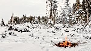 Тактика выживания в зимнем лесу