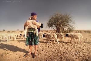 Маленькая разбойница «ворует» ягненка из стада в деревушке, затерянной в песках пустыни Тар, Индия (Амелии 6 лет)