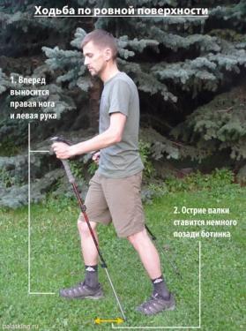 Техника ходьбы с треккинговыми палками