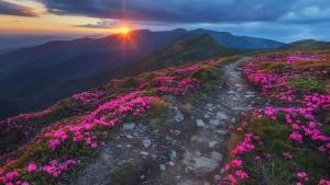 Фото дня: Розовая Черногора