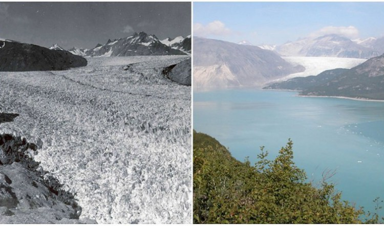 Ледник Муир, Аляска. Август 1941 г. — август 2004 г.