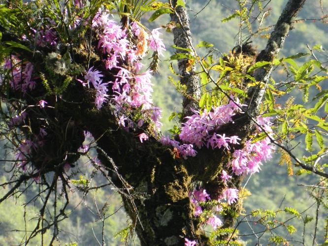 Флора и фауна Национального парка Канченджанга (Khangchendzonga National Park)