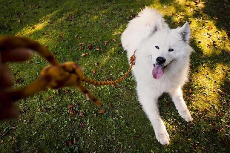 Это Макс, и ему нравится его новый поводок. © Natalie Berry