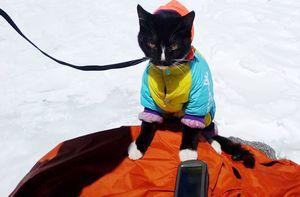 Российский турист пытался совершить восхождение на Эльбрус вместе с котом