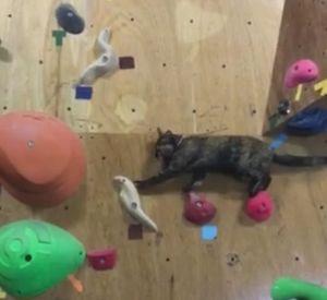 Как проходят боулдеринговую проблему кошки