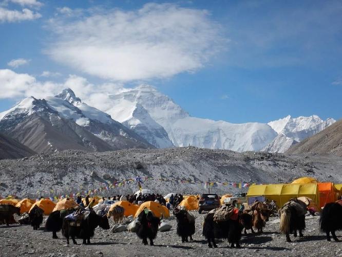 Нагруженные яки на пути из Базового лагеря (5300 м) в лагерь 6400. Этот путь занимает у яков примерно 10 часов. Фото: Сергей Ковалёв.