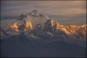 Трагедия на Дхаулагири: из-за стремления клиентов подняться на вершину горы умер непальский шерпа