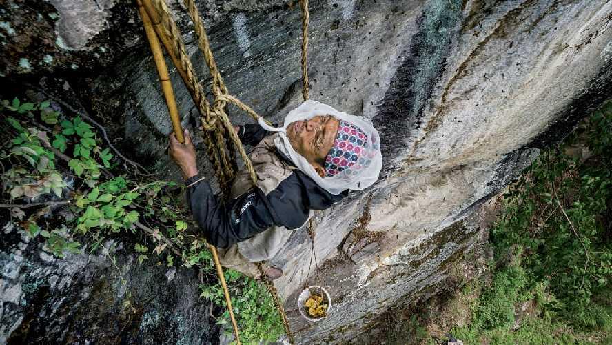 Сбор галлюциногенного меда в Непале