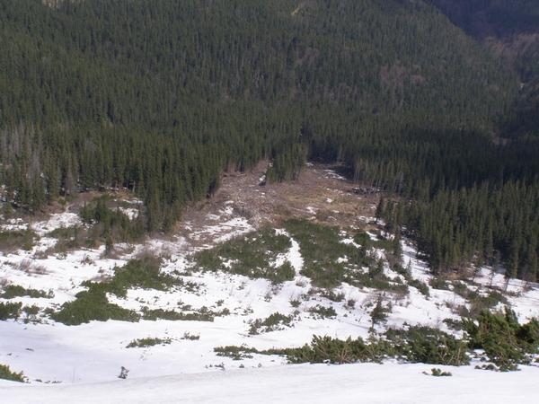 Следы схода лавины с северного склона горы Лопушная (Горганы) в массиве Сивули, в 1997 году. Фото skelya . net