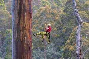 Измеряя самые высокие деревья в мире