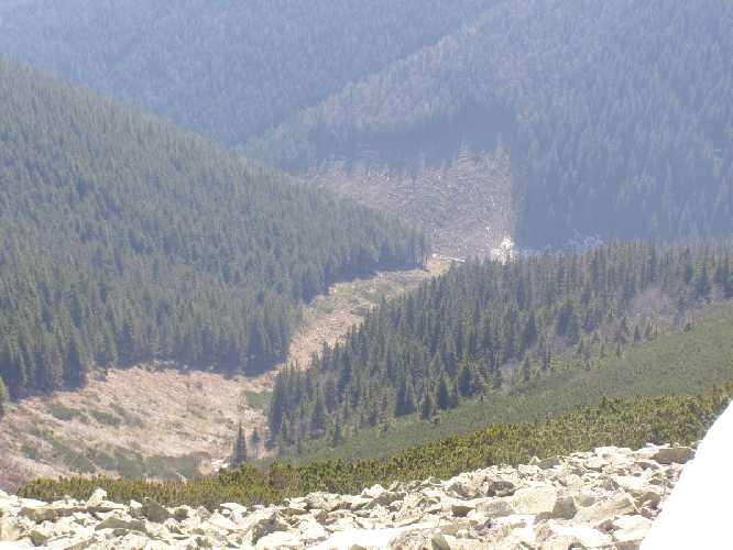 Следы схода лавины с вершины горы Грофа 1996 год (Горганы). Лавина уничтожила 10 га леса. Отрыв снежного покрова на восточном склоне произошел на высоте 1740 м. Остановилась лавина на высоте 850 м. Фото skelya . net