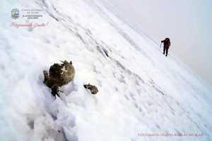 Тела альпинистов, погибших 59 лет тому назад, спустили со склона вулкана Орисаба спустя 3 года после обнаружения