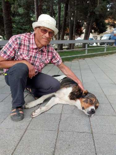 Здесь всё наоборот - Валера друг почти всех собак Местии. Фото Сергей Дидора