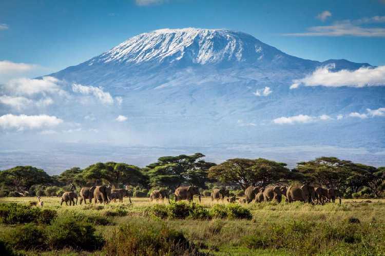 Килиманджаро (Kilimanjaro, 5895 м)