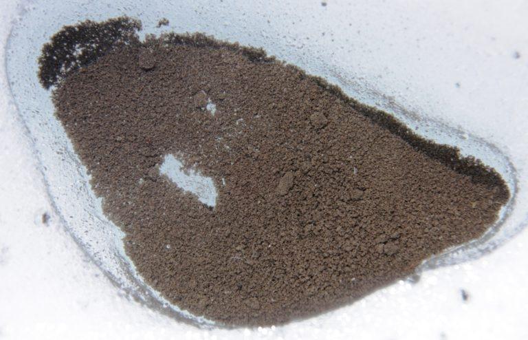Отложения криоконита на леднике. Фото Università Bicocca