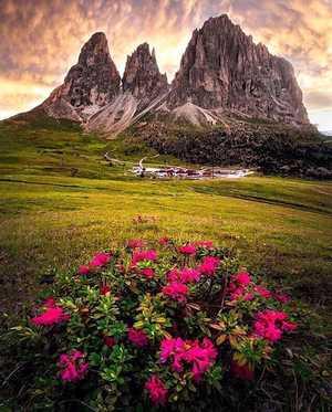 Фото дня: цветы для перевала Селла