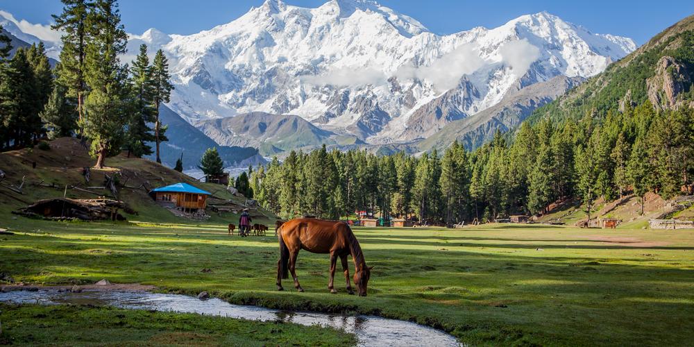 Fairy Meadows - базовый лагерь восьмитысячника Нангапарбат в Пакистане