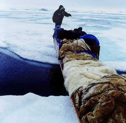 Камутики - традиционные сани, запряженные снегоходами или собачьими упряжками. В июне уже начинают формироваться выходы открытой воды в тающем морском льду. Фото: Paul Gagner