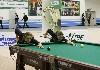 В Кемерово проведут международный турнир по бильярду